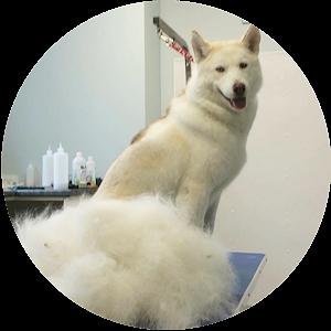 grooming-1